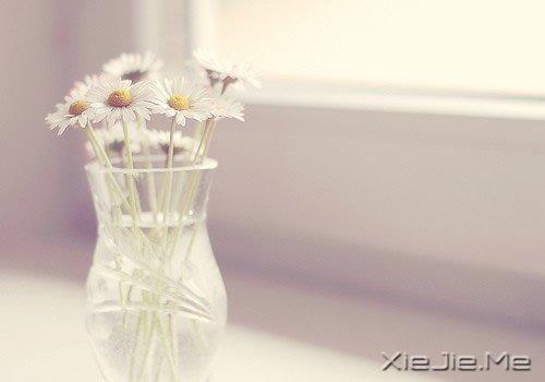 生命,淡然如花就是幸福